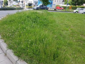 Blumeninsel neben gemähtem Gras